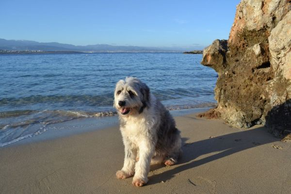 Suess, the beach dog