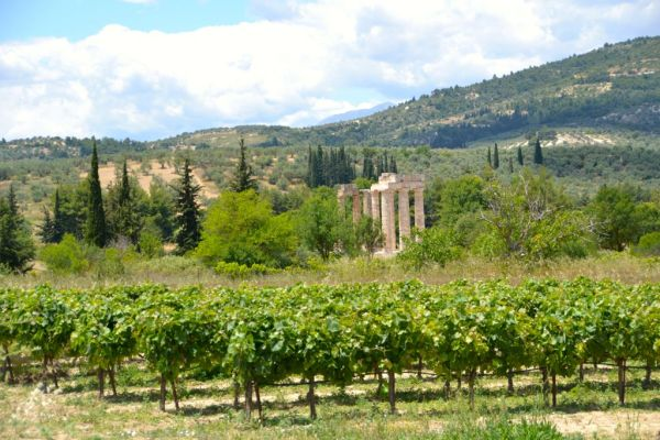 Temple of Zeus presides over Nemea vineyards